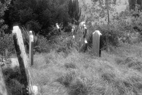 Irish Graves 3872
