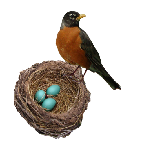 robins-nest-web-1