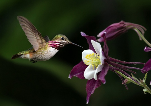 Plus hummingbirds (amazing photo by Ken Helal)