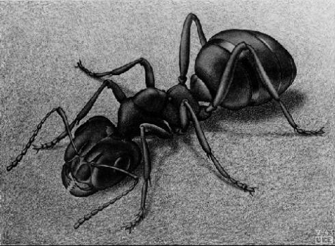 Ant (M.C. Escher, 1943, Lithograph)