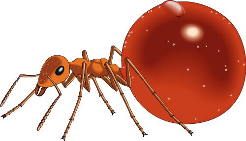honeypot_ant