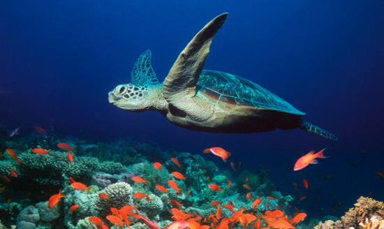 Maybe the point is that turtles are beautiful and should be considered sacred