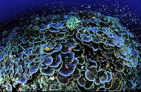 Coral Reef at Jarvis Island National Wildlife Refuge