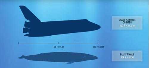 blue-whale-space-shuttle