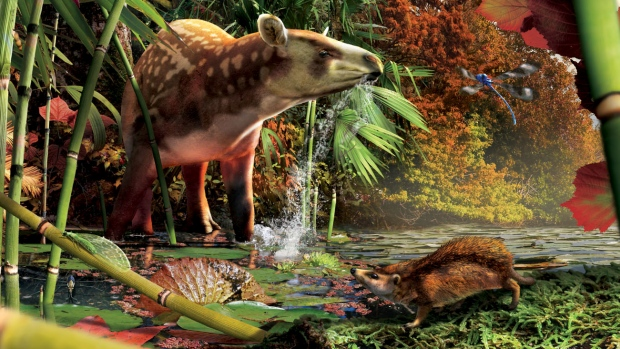 a reconstruction of the early Eocene  in northern British Columbia, a tapir-like creature from the genus heptodon with a while tiny proto-hedgehog in the foreground. (Julius T. Csotonyi)