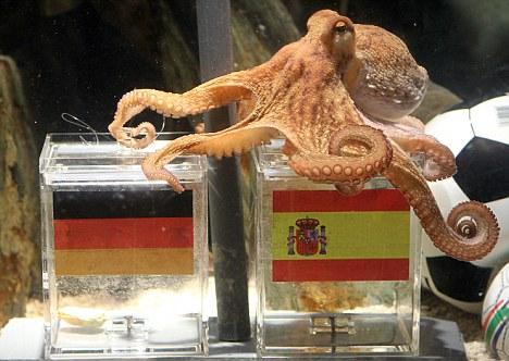 Paul chooses between Spain and Germany