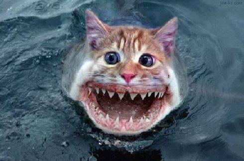 cat fish (18)