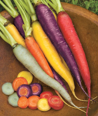 A rainbow of heritage carrots from Burpee seeds
