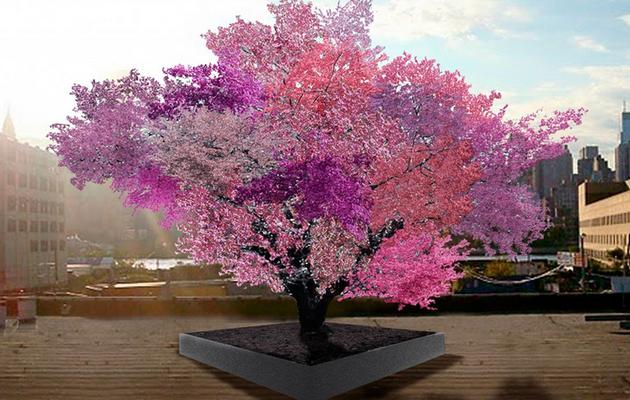 The Tree of Forty Fruit by Sam Van Aken