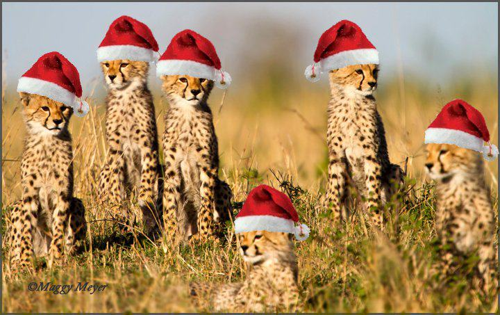 I said Cheetah with a hat not cheetah in a hat...oh, just go look at the post