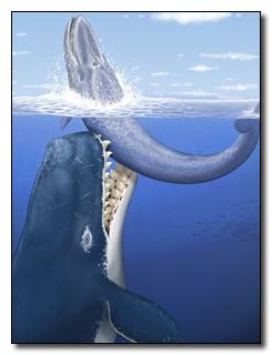 Livyatan Melvillei biting a smaller baleen whale (painting via dino-rider)