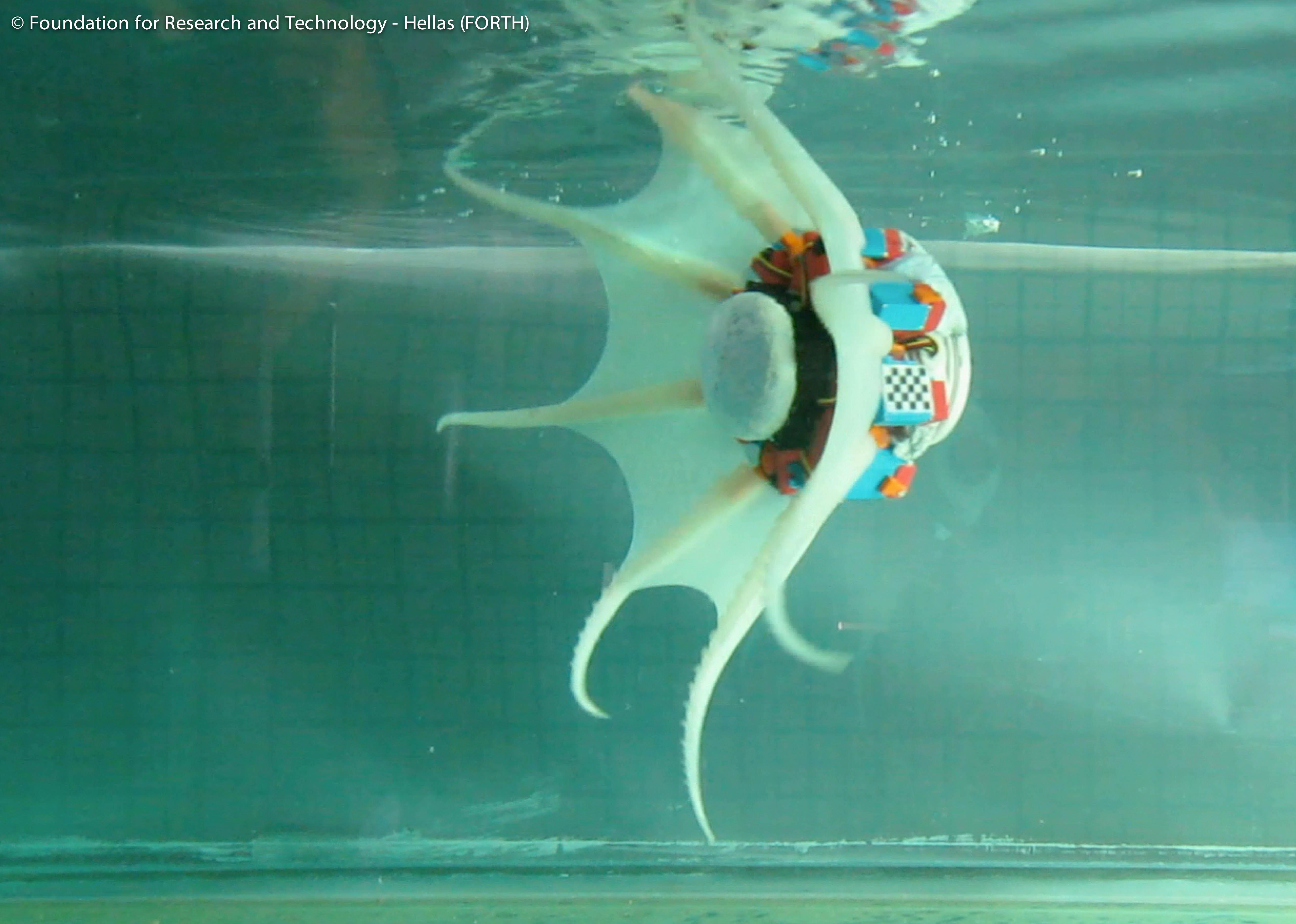 16_octopus_robot