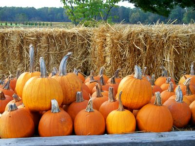 pumpkins_roadside_with_forest_0(1)