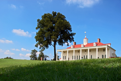 A pecan tree growing over George Washington's mansion at Mount Vernon