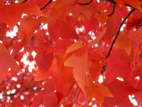 branch-of-red-orange-leaves_medium