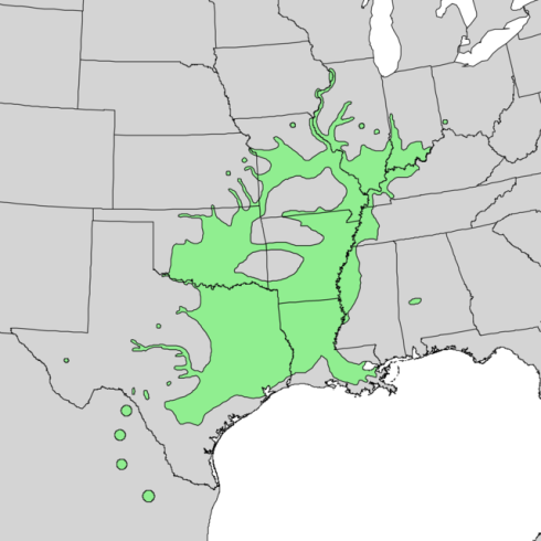Natural range of pecan tree (Carya illinoinensis)