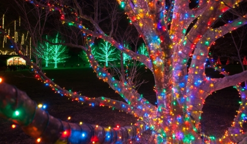 Longwood Gardens Outdoor light display (by Daniel Traub)