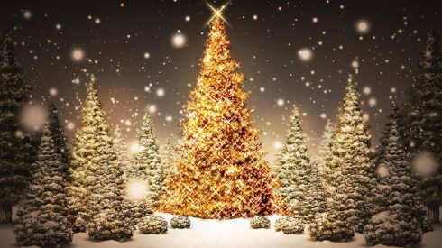 merry-christmas-tree-wallpaperxmas-stuff-for-merry-christmas-tree-2013-94ec0zbd