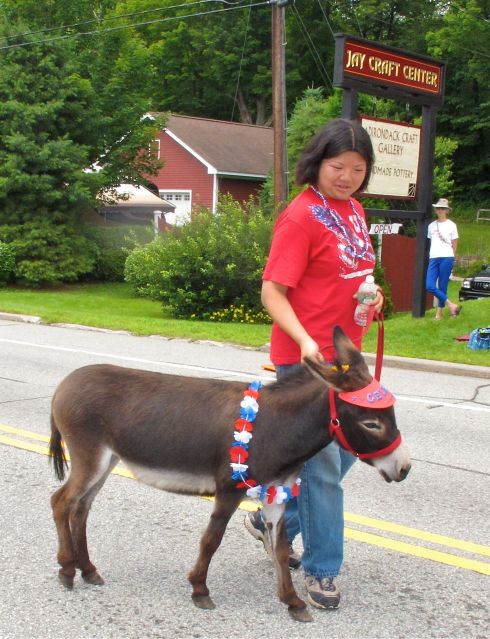 Miniature donkeys acting as therapy animals (look how fancy they can dress up!)