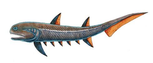 pelagic Climatius