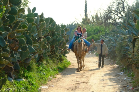 An opuntia hedge towers over travelers on camelback