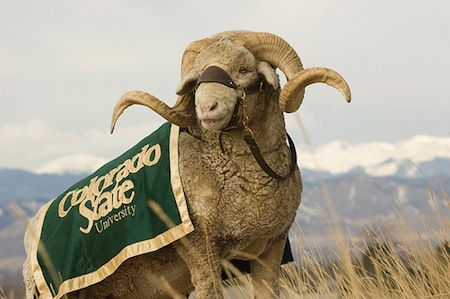 Cam the Ram--Colorado State Mascot