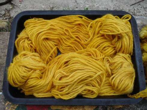 Wool yarn dyed with turmeric