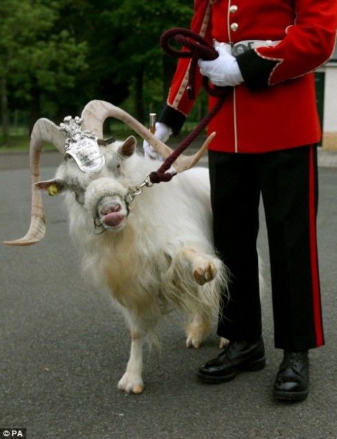 Lance Corporal William Windsor (a regimental mascot in the armies of the Queen of England)
