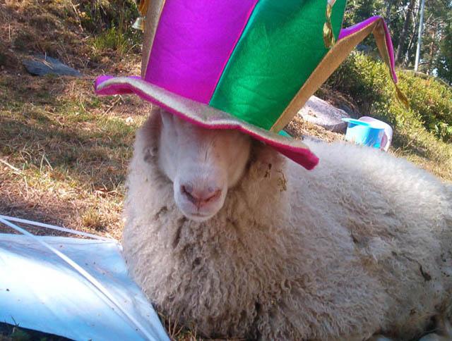 sheepgraduating
