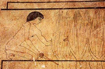 A farmer harvests an onion in a painting in the Ancient Egyptian Tomb of Neferherenptah (ca. 2310 BC)