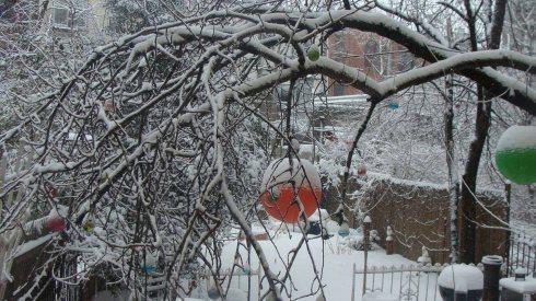 Winter Garden 2