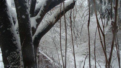 Winter Garden 3