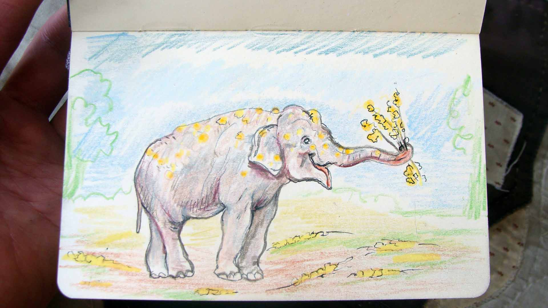 Adolescent elephant with Forsythias (Wayne Ferrebee, 2015, ink and colored pencil)