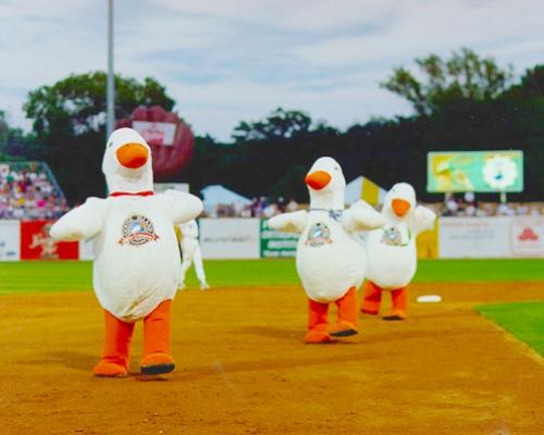 inflatable-goose-island-mascot-costume