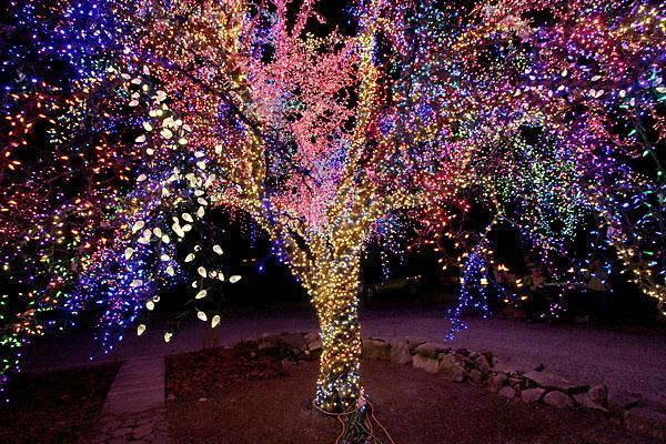 magic_tree_t_w600_h1200