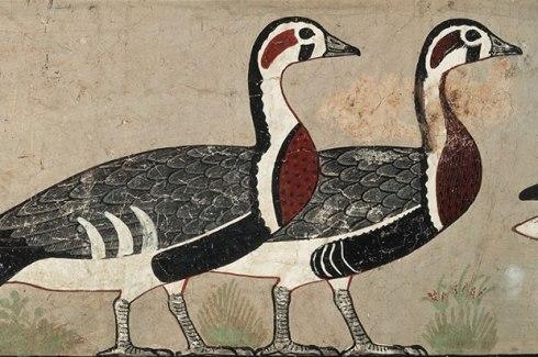 medium-geese