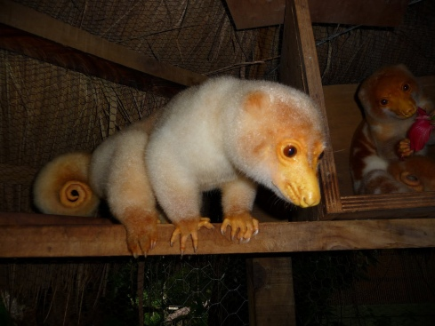 Common Spotted Cuscus (Spilocuscus maculatus) photo by Waterdragon62