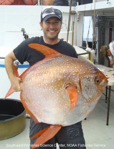 Lampris guttatus (NOAA)