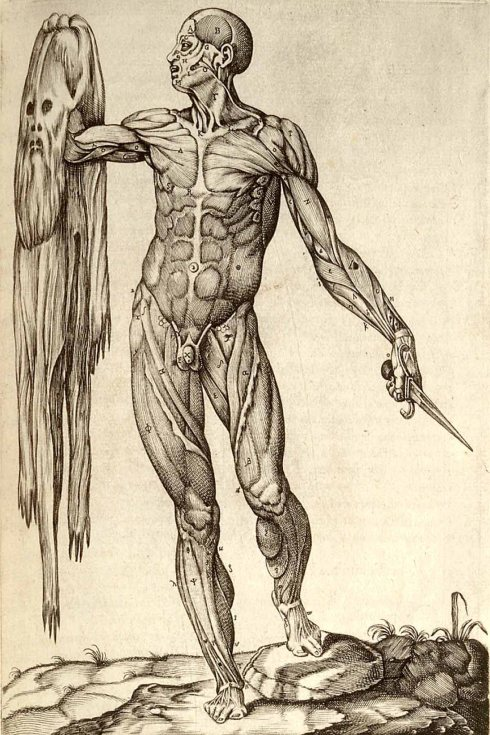 A Flayed man holding his own skin (Gaspar Becerra, 1556, Etching)