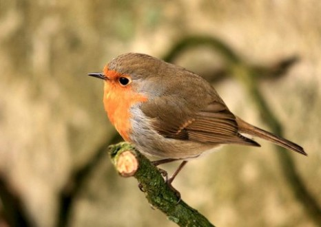 Here is a cute little bird to break the tension.