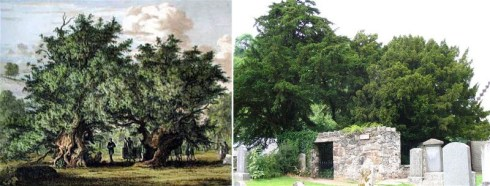 The Fortingall Yew then and now: partying with Victorian dandies in 1822 on the left, and switching gender at present time on the right