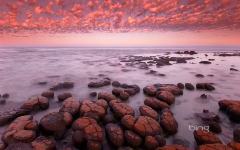 Stromatolites at dawn in Shark Bay, Western Australia