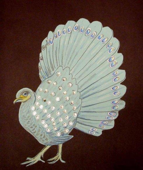 Peacock Pheasant1