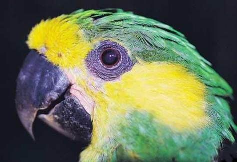 040407_parrot_ccol.grid-6x2