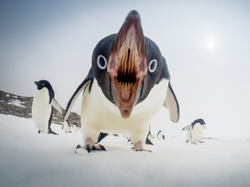 Hay Editor! Caption this - the Penguins
