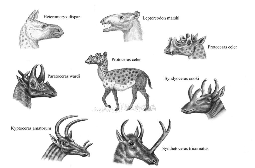 protoceratids_by_willemsvdmerwe-d6n8v9j.jpg