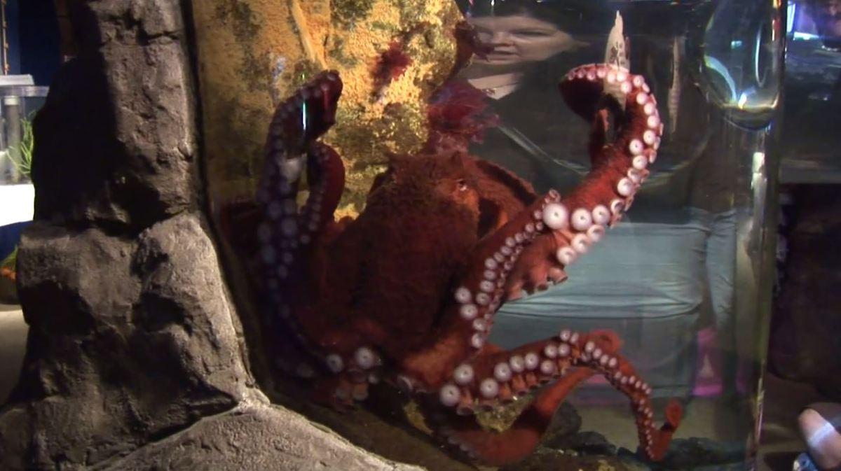 giant-octopus.jpg