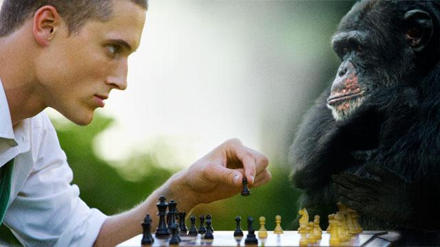 human-primate-game-ars