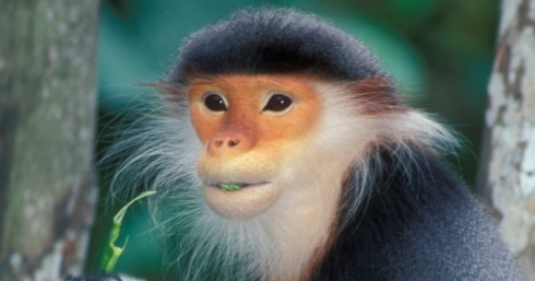 Monkey-Face