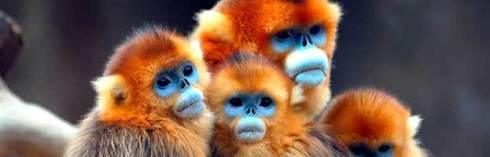 monkeys_minisite-623x200